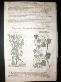 Gerards Herbal 1633 Hand Col Botanical Print. Scammony